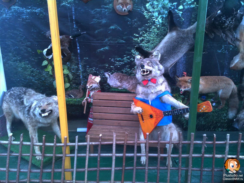 волк играет на балалайке